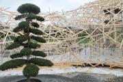 Baum und Holzkonstruktion
