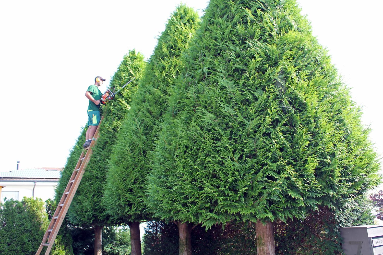 Evergreen Gartenbau baumpflege berger gartenbau